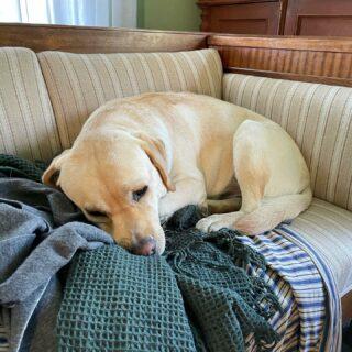 Det är ett hårt jobb att vara hund, men någon måste göra det.
